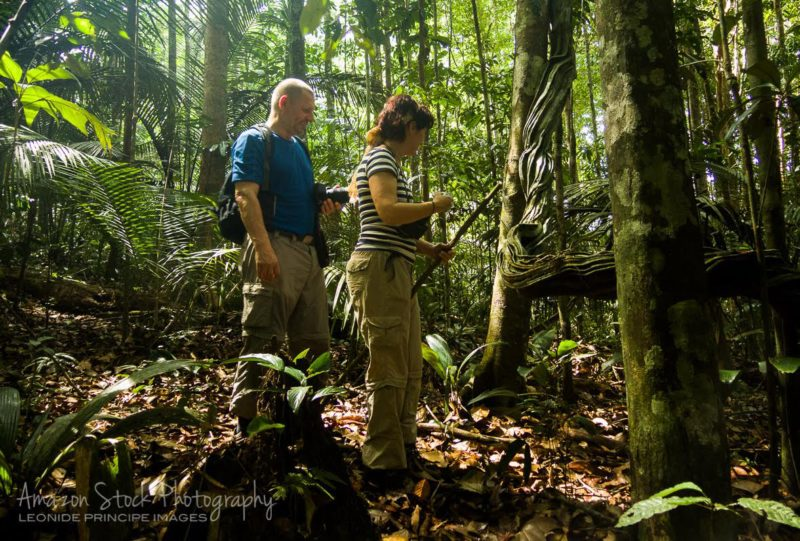 Trilha na Floresta - Tropical Tree Climbing