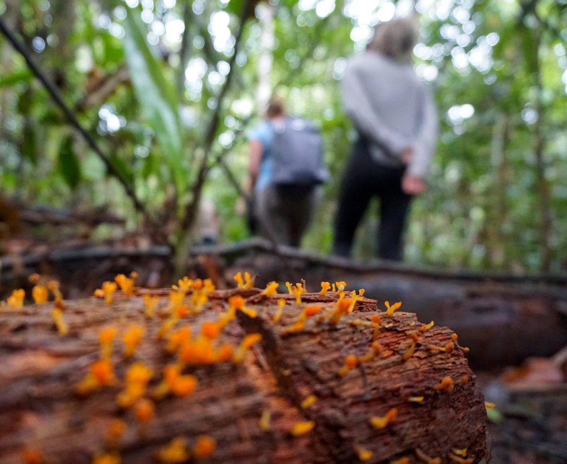 pessoas na floresta observando a natureza