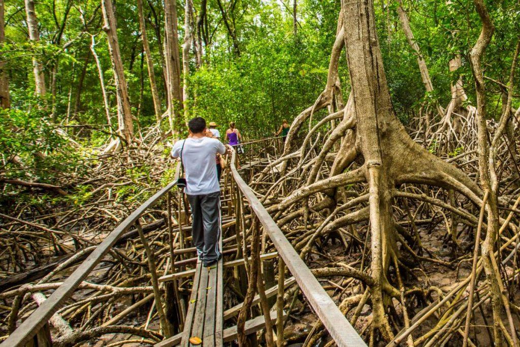 trilha de árvores secas em meio a floresta na ilha de marajó