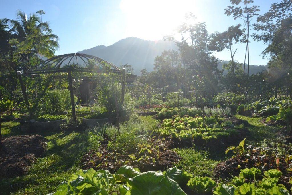 Horta iluminada pelo sol com montanha ao fundo