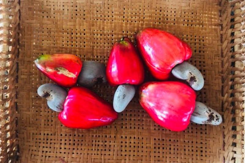 fruta caju